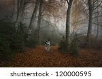 Dog in the forest in a very dark fog - stock photo