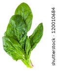 spinach leaves isolated on white background - stock photo