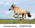 Beautiful fjord horse running on pasture - stock photo