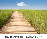 Wooden Boardwalk Creates Path...