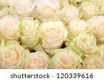 A large bouquet of white roses - stock photo