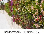 Fence Of Multicolored Flowers...