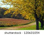 Fall scene: Colorful tree along gravel road and prairie in autumn colors - stock photo