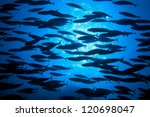Shoal Of Fish In The Blue Wate...