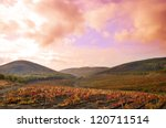 Landscape with vineyards. Mountains at background - stock photo