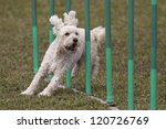 Happy dog in the agility slalom - stock photo