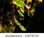 close up on a moss with water... | Shutterstock . vector #12076714