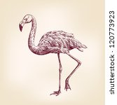 flamingo hand drawn vector llustration realistic sketch - stock vector