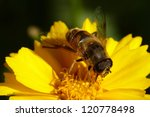 bee on the yellow flower - stock photo