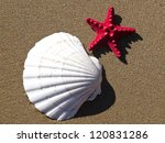 shell and red starfish on the sand beach - stock photo