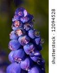 water drop flower | Shutterstock . vector #12094528