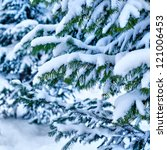 Spruce branches with snow - stock photo