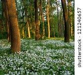 Spring Flowers In Wood