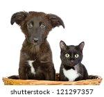 Cat And Dog Looking At Camera....