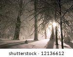 Evening Forest Snowy Landscape