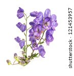 Small photo of Aconitum napellus on a white background