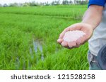 Rice farmer using nitrogen fertilizer on his field - stock photo