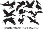 Vector pelican silhouette