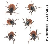 Tick collection isolated on white background - stock photo