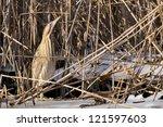 great bittern camouflaged in... | Shutterstock . vector #121597603