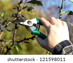 pruning apple tree in the spring - stock photo