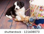 Stock photo very young puppy caught on playing with balls of wool 121608073