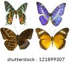 butterfly on white | Shutterstock . vector #121899307
