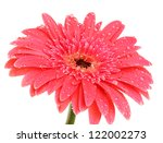 beautiful gerbera flower...   Shutterstock . vector #122002273