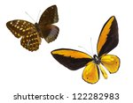 butterfly on white | Shutterstock . vector #122282983