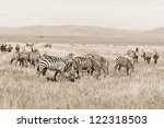 zebras at amboseli national... | Shutterstock . vector #122318503