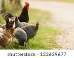 A Group Of Guinea Fowl And...
