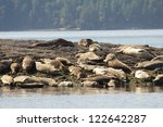 group of lazy seals lying on a... | Shutterstock . vector #122642287