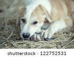 Young dog plays and eats feathers of bird - stock photo
