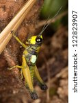 exotic small locusts are very...   Shutterstock . vector #122823907