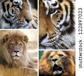 big cats collage | Shutterstock . vector #122897023