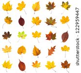 Many Several Leaves Isolated...