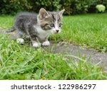 Domestic Cat Outside In The...
