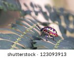 a colorful shield bug is... | Shutterstock . vector #123093913