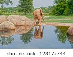 elephant reflection - stock photo