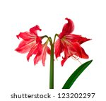 red lily flowers isolated on... | Shutterstock . vector #123202297