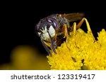 Small photo of Bee wolf (Philantus Triangulum)