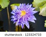 purple lotus flower blooming | Shutterstock . vector #123324733