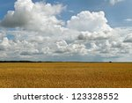 Field of golden wheat in a cloudy day. - stock photo