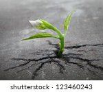 Little Flower Sprout  Grows...