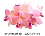 Pink orchid phalaenopsis, closeup, on white background - stock photo