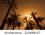 oasis in the middle of a desert ...   Shutterstock . vector #123498157