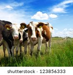 calves on the field | Shutterstock . vector #123856333