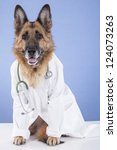 german shepherd disguised veterinarian, sitting and looking alert. on a blue background - stock photo