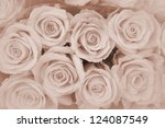 brown roses background - stock photo