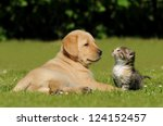 Stock photo dog and cat 124152457